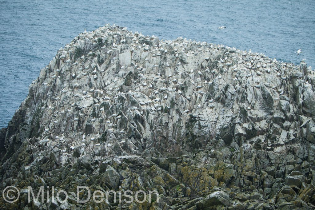 Birds of Saltee